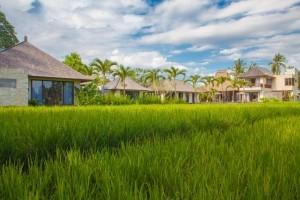 View from the Rice Fields